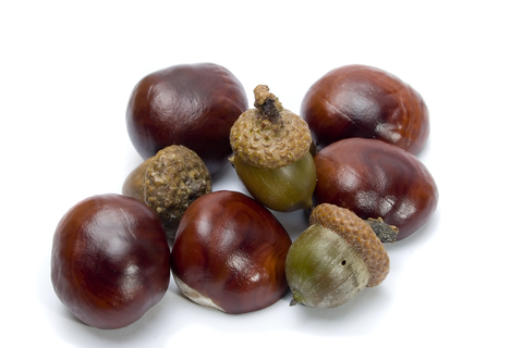 Chesnuts and Acorns